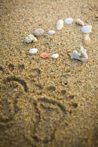 貝殻&足跡